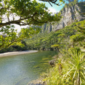 Lush green rainforest along Pororai River, NZ — Stock Photo