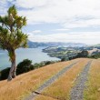 Otago peninsula coastal landscape, Dunedin, NZ — Stock Photo