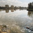 Lake pollution Kaliningrad — Stock Photo