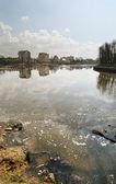 Lake pollution Kaliningrad — Stock Photo