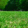 Grass in the park — Stock Photo