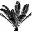 Palm Silhouette — Stock Photo #9899531