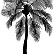 Palm Tree Silhouette — Stock Photo