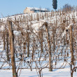 Stock Photo: Tuscany: wineyard in winter