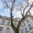 Paris - Place de Fustemberg - Stock Photo