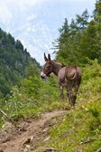 Donkey on Italian Alps — ストック写真