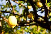 経済 - レモン — ストック写真