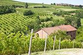 Italian villa with vineyard: spring season — Stock Photo