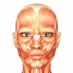 Female Human Face Anatomy — Stock Photo