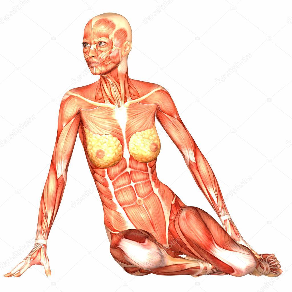 Human woman anatomy