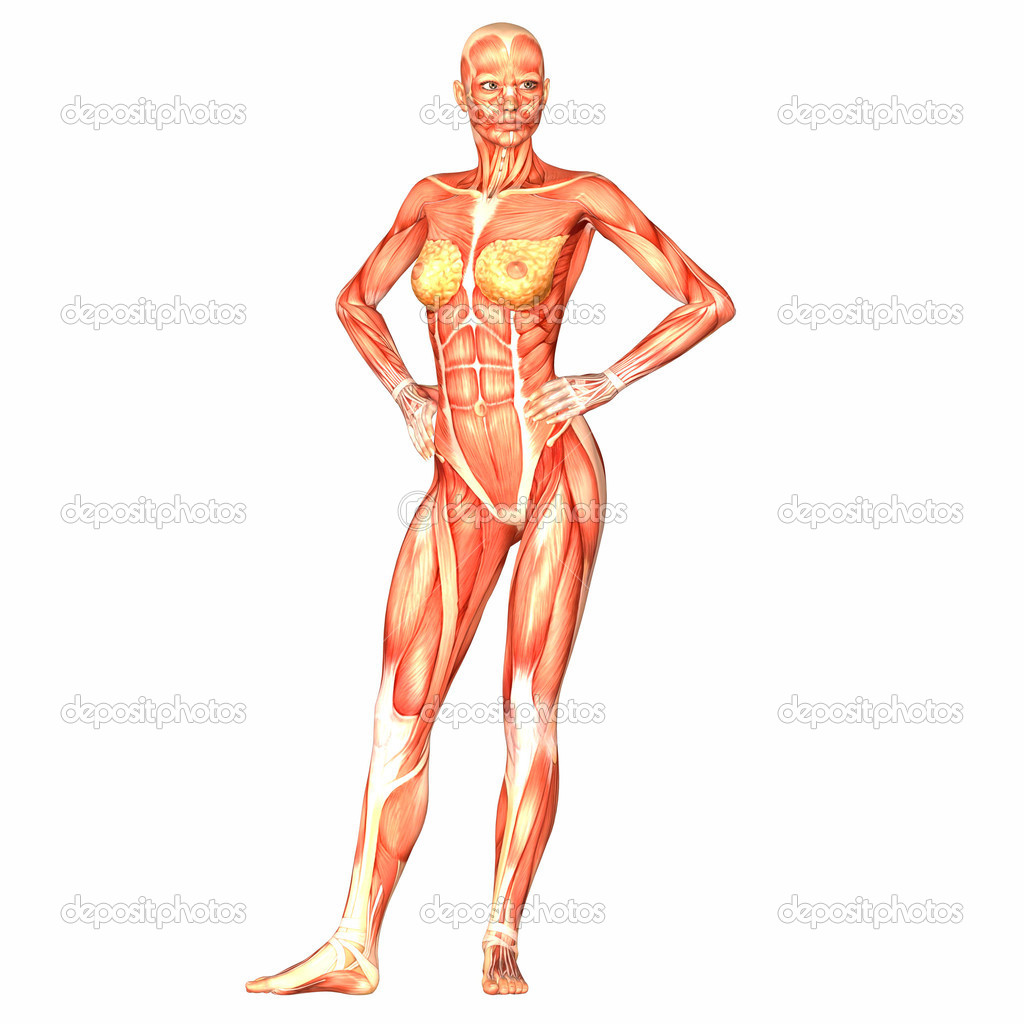 ... Body Anatomy | Human Body Anatomy