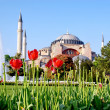 Hagia Sophia in Spring — Stock Photo