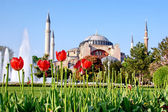 Hagia Sophia in Spring — Stock Photo