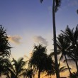 Sunrise through the palms — Stock Photo