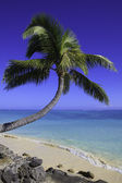Palm tree over the water — Stock Photo