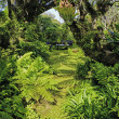 Tropical garden in hawaii — Foto Stock
