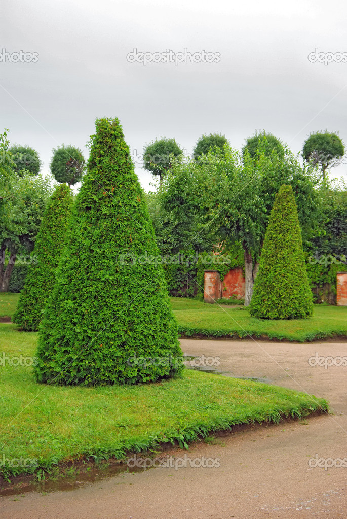 Cut Trees in Garden of Peterhof in St.Petersburg, Russia. — Stock Photo #8349925