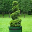 Beautifully manicured park plant. — Stock Photo