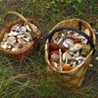 Two baskets of different mushrooms — Stock Photo