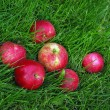 Red Apple In Grass — Stock Photo