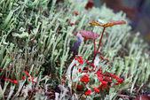 White moss macro shot — Stock Photo