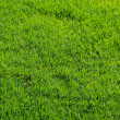 Fresh spring green grass texture — Stock Photo