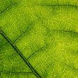 Green leaf background. — Stock Photo #8946784