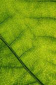 Green leaf background. — Stock Photo