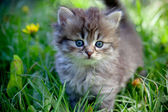 Small cat on a grass — Stock Photo