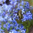 Butterfly on flowers in a garden — Stock Photo