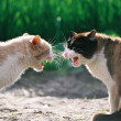 Fighting cats - Photo