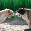 Fighting cats - Stock Photo