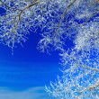 Trees covered with snow against the sky — Foto de Stock