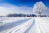 Trees covered with snow against the sky — Stock Photo