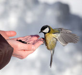 Feeding of birds in the winter — Stock Photo