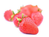 Group of Strawberrys - one in focus — Foto Stock