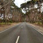 Open road in Australia — Stock Photo