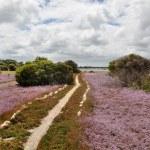 Australian landscape — Stock Photo