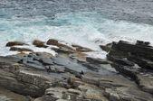Große wellen und den wilden rock — Stockfoto