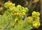 Fantastic exotic plant — Stock Photo