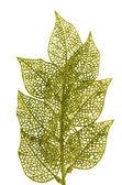 Christmas decorative green leaves — Stock Photo
