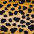 False leopard skin spots - Stock Photo