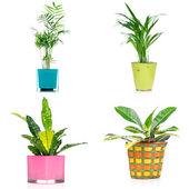 Sada pokojových rostlin — Stock fotografie