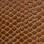 ������, ������: Brown snake skin background