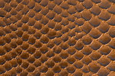 Brown snake skin background — Stockfoto