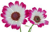 Beautiful pink flowers — Stockfoto