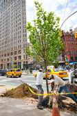 MillionTreesNYC tree planting — Stock Photo