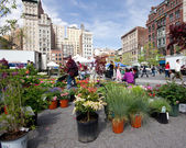 NYC Greenmarket — Stock fotografie