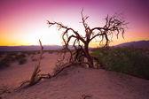 árbol del desierto — Foto de Stock