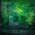 Dark Woods — Stock Photo